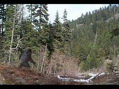 every bigfoot picture, fun to see - Bigfoot News, Bigfoot Sasquatch, Bigfoot Video, Real Bigfoot Pictures, Bigfoot Photos, Recent Bigfoot Sightings, Bigfoot Documentary, Giant Skeleton, California Highway Patrol