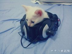 My cat ♥ headphones Cute Baby Cats, Cute Babies, Dumb Animals, Cat Headphones, Nyan Cat, Cat Boarding, Warrior Cats, Crazy Cats, Mammals