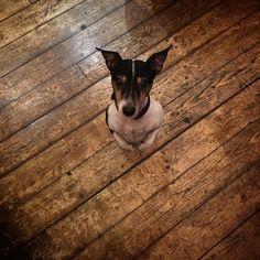 Good Night from Chester coolest dog in Soho #tinydancer #chesterofsoho #scotchwhisky #whiskeygram #whiskeybar #whiskeyporn #soho #london