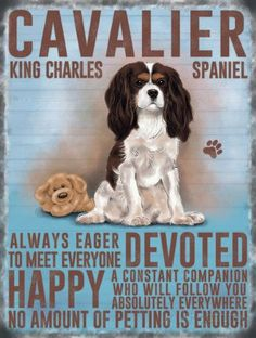Cavalier King Charles Spaniel Dog Breed Metal Sign_D Schnauzer Mix, Miniature Schnauzer, Christmas Gifts For Pets, Christmas Animals, Blue Merle, Dog Lover Gifts, Dog Lovers, Lovers Gift, I Love Dogs
