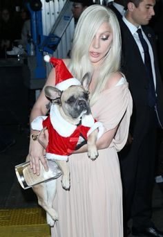 Lady Gaga's French Bulldogs Are the Real Stars of the Holiday Season
