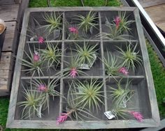 Air Plants Air Plants Care, Houseplants, House Plants, Interior Plants, Container Plants