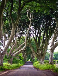 The Dark Hedges, Northern Ireland #GameOfThrones