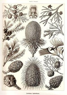 naturalismo xix xilografia - Buscar con Google