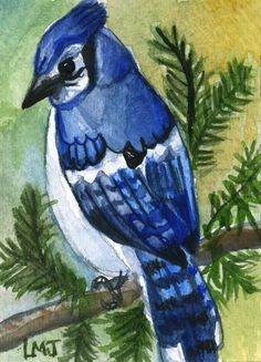 ACEO, PRINT of Original Painting, Art Card Blue Jay Bird, Birds #ACEOaceo