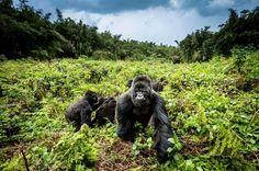 La aventura de #viajar a Uganda: http://muafrika.es #viajeros #Africa #aventura