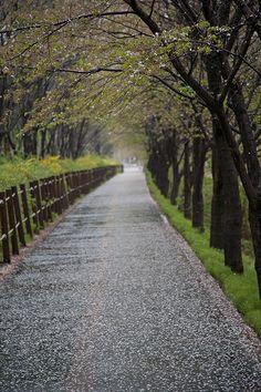 a rainy day,spring,seoul,KOREA photo by e.s lee