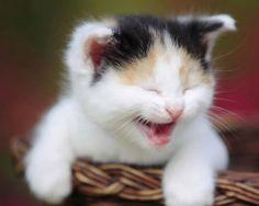 Source: Unknown ..   #cat #cute #kitten