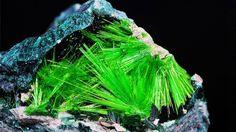 Cuprosklodowskite urânio é um mineral secundária formado pela alteração de minérios de urânio anteriores. Esta muito raro mineral radioativo. De: Musonoi minha, kolwezi, zona oeste,, República Democrática do Congo