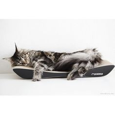 Kassi kraapimisalus TOBI (must) Cat Scratcher, Scratching Post, Wood Species, Colour Black, Color, Animals, Outer Hebrides, Birds, Handmade