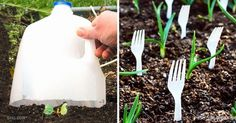15superb gardening tips all your neighbors will want toknow