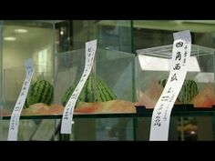 Square, Heart, Pyramid - Odd shaped watermelons herald Japan's summer ...