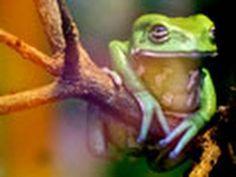 froggy :)