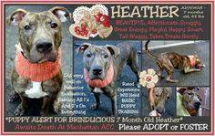 Rip sweet baby 12-15-15 Heather run free.