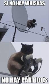 fotos humor gatos - Buscar con Google