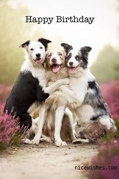 Three-Dog-Happy-Birthday-Wishes-Image.jpg (236×354)