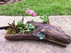 Driftwood:hand rubbed wax Assorted plants succulent, cacti, orchid, and kalanchoe chocolate soldier.