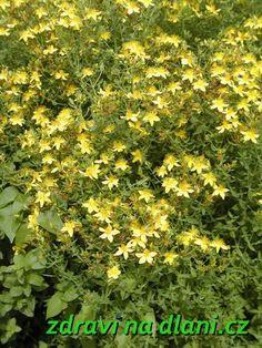 Herb Garden, Home And Garden, Korn, Herbs, Diet, Herbs Garden, Herb, Medicinal Plants