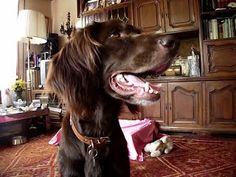 LOLA, la novia de mi perro Bambi