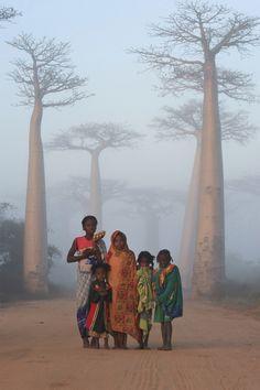 Avenue of the Baobab, near Morondova, Madagascar.