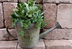 Easy-care succulents are adaptable to whimsical planters like this repurposed watering can. If using an up-cycled container, be sure to provide adequate drainage, and use a potting soil designed especially for succulents. For more tips on displaying succulents in style, click through to The Home Depot's Garden Club.