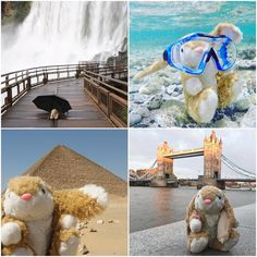 Bunny Hatgis - Travelling rabbit Travel Toys, His Travel, Number Of Countries, Future Travel, Otters, Trip Planning, Travelling, Rabbit, Germany