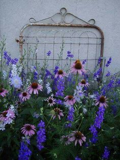 Cone Flowers and delphinium. Garden Whimsy, Cottage Garden Design, Garden Art, Cottage Gardens, Old Garden Gates, Old Gates, Amazing Gardens, Beautiful Gardens, Beautiful Flowers