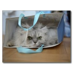 Don't Let The Cat Out of The Bag - Funny and Cute Kitty Postcard