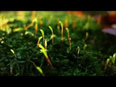 Abraham Hicks - Process - I know I am loved, I know I am guided - anything I desire is possible - YouTube