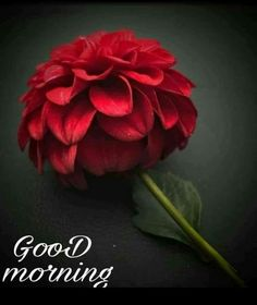 [Good morning love] Latest good morning images for love ~ Good morning inages Latest Good Morning Images, Good Morning Picture, Good Morning Love, Good Night Image, Morning Pictures, Good Morning Wishes, Morning Msg, Wednesday Morning, Morning Greetings Quotes