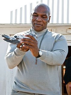 Mike Tyson: Ex-Girlfriend Cooked and Ate My Pigeon Cute Pigeon, Pigeon Bird, Kong Kong, Racing Pigeon Lofts, Pigeon Breeds, Homing Pigeons, Boys Dpz, Check Fabric, Mike Tyson