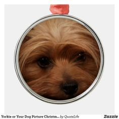 Yorkie or Your Dog Picture Christmas Metal Ornament Pet Gifts, Dog Pictures, Yorkie, Dog Food Recipes, Keep It Cleaner, Family Photos, Your Dog, Ornaments, Pets