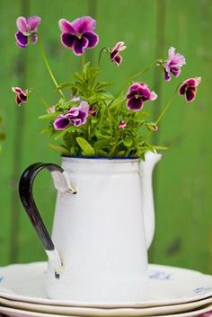 pansies and enamel coffee pot