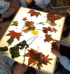 jugando con mas hojas Sensory Lights, Sensory Art, Reggio Emilia, Kindergarten Activities, Toddler Activities, Licht Box, Tree Study, Light Board, Fall Preschool