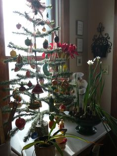 food tree in kitchen