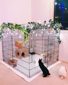 Neue Pet Rabbit Indoor Bunny Cages Ideen You are in the right place about dog kennel indoor diy Here Pet Bunny Rabbits, Pet Rabbit, Baby Bunnies, Cute Bunny, Rabbit Cage Diy, Diy Bunny Cage, Rabbit Pen, Dwarf Bunnies, Bunny Bunny