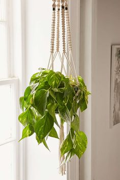 Hang a plant in living room, display some in kitchen Iris Macrame Hanging Planter Hanging Terrarium, Macrame Hanging Planter, Diy Hanging, Hanging Planters, Hanging Baskets, Hanging Gardens, Hanging Plants Outdoor, Best Indoor Plants, Indoor Planters