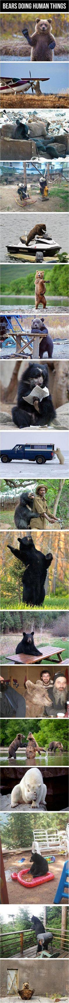 to be a bear or not to be a bear that's the question