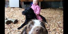 A puppy photobomb (BRUN5KILL via Reddit)