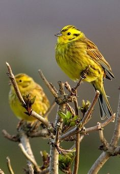 Photography via Photography Talk. Pretty Birds, Love Birds, Beautiful Birds, Small Birds, Wild Creatures, All Gods Creatures, World Birds, British Wildlife, Draw On Photos