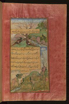 Birds of Hindustan: luchas, called būqalamūn, and partridges (Memoirs of Babur), Walters Art Museum Ms. W.596, fol.31b   by Walters Art Museum Illuminated Manuscripts