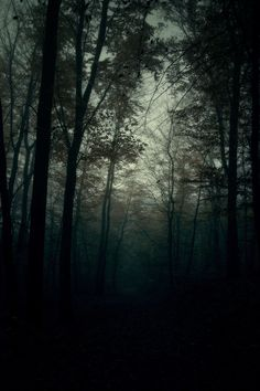 """This is what I envisioned the deeper parts of the Wild Wood to look like where very little light was able to penetrate the trees. When Mole enters the forest in search of Badger it was plagued by animals with """"evil little wedged-shaped faces"""" that disappeared into little nooks and crannies. In essence, it was spooky to say the least."""