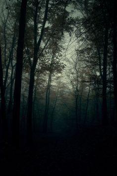 dark woods ∞