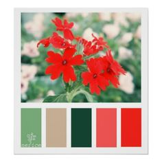 red_flowers_color_palette