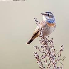 Kuvahaun tulos haulle lintu kannolla