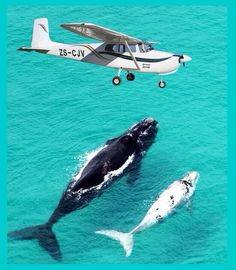 Flyover - Whales