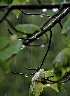 Rain and Green Smell Of Rain, Chameleon Color, I Love Rain, Rain Days, Rain Photography, Rain Storm, Sound Of Rain, Rainy Night, Black Garden