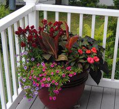 Tropicana Black Plant   deck planter with cannas