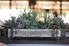 Succulents in an old silver tray...
