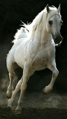 Arabian horse!!